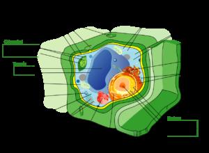 Celulele stem pot ajuta la repararea discurilor intervertebrale deteriorate
