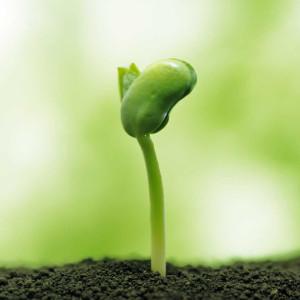 Celule stem din plante